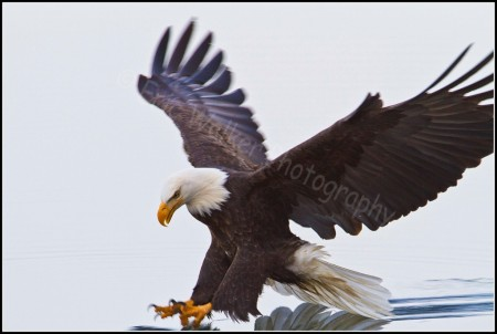 Photo of Surfer Eagle by Eric Walker